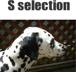 S‐selection